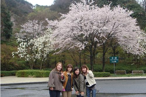 桜がキレイ