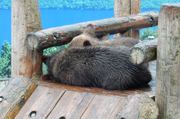 熊発見!(熊牧場にて)