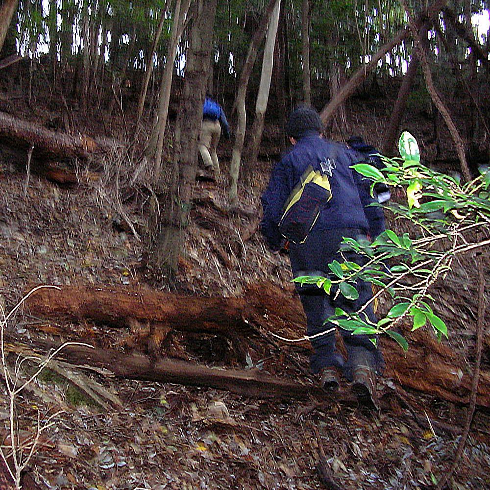 台風の影響も。倒木が目立ちました。