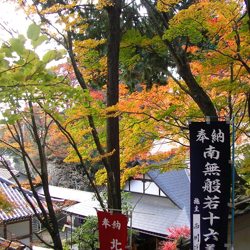 本山寺は紅葉真っ盛りでした。