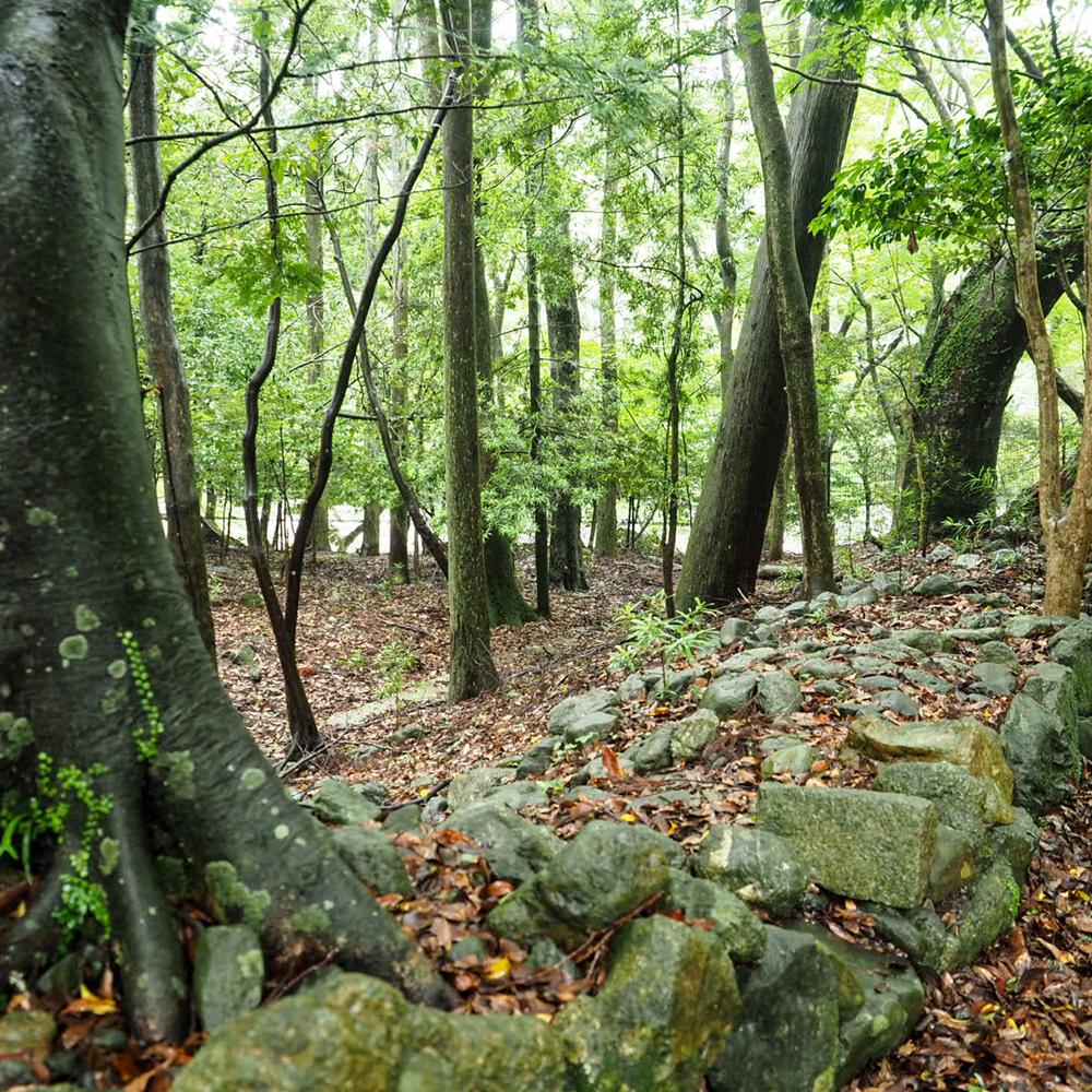 森のようです。